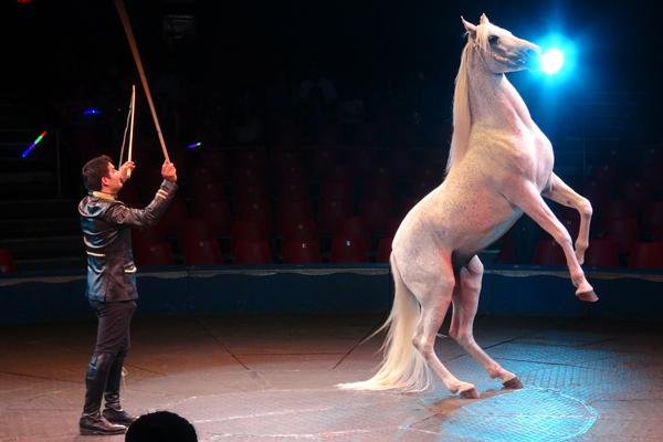 2013.07 Circo DSC09875