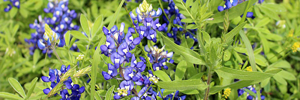 A Bluebonnet Road Trip (photos)
