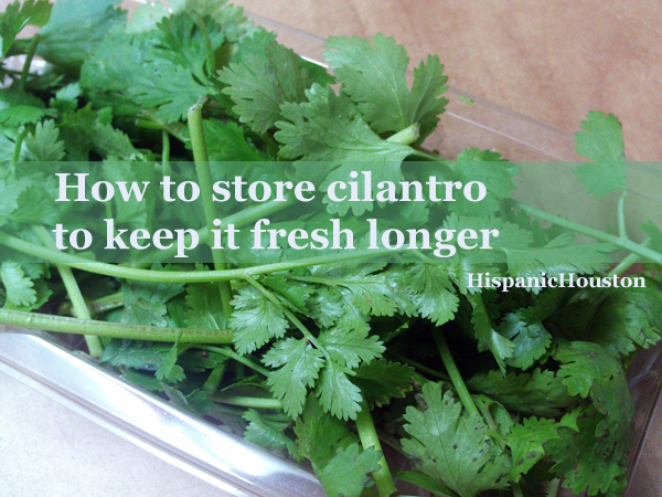How to store cilantro to keep it fresh longer (more info at www.hispanichouston.com)