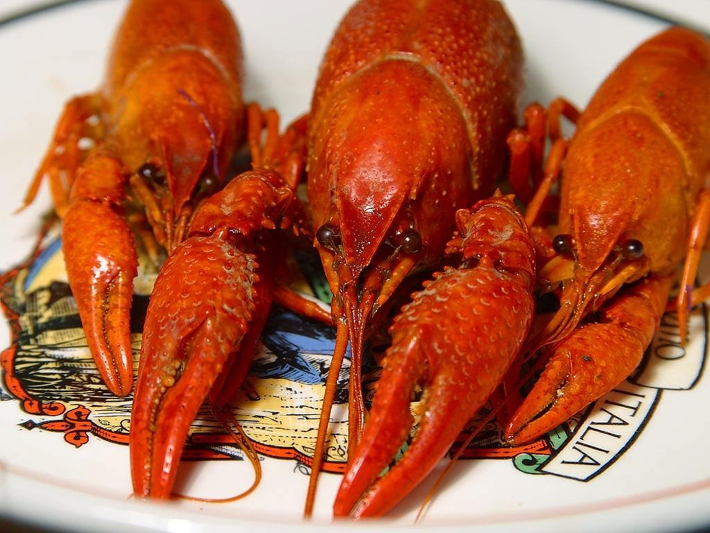 Brazoria County Crawfish Festival on April 15 to 17, 2016
